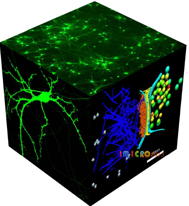 扫描技术获得神经突触在纳米尺度的超微三维结构)